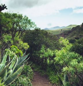 Billeje & biludlejning på Gran Canaria